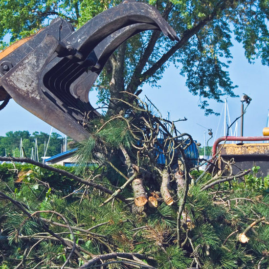debris removal , Landscape Services in Kendall , Debris Clean Up