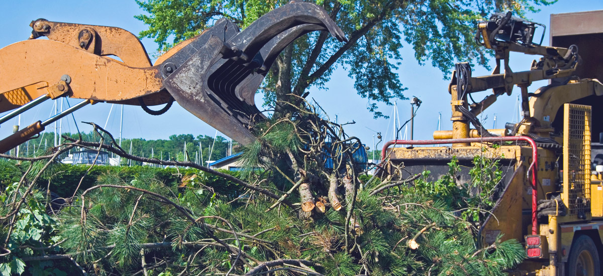 debris removal , Landscape Services in Kendall , Debris Clean Up