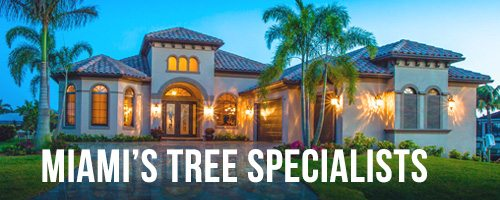 miami-tree-specialists, Lawn Maintenance Services