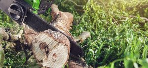 Tree Stump Removal Cost in Cutler Bay , Stump Grinding Services | Miami Tree Company | Lawn Care , Tree Removal Near Palmetto Bay