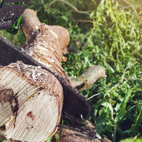 Stump Grinding Services | Miami Tree Company | Lawn Care , Tree Removal Near Palmetto Bay