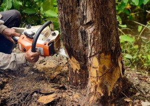 South Miami Tree and Stump Removal
