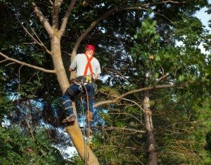tree shaping , Tree Services Near Cutler