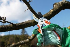 Best Tree Pruners in South Miami