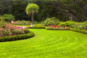Professionally Maintained Landscape