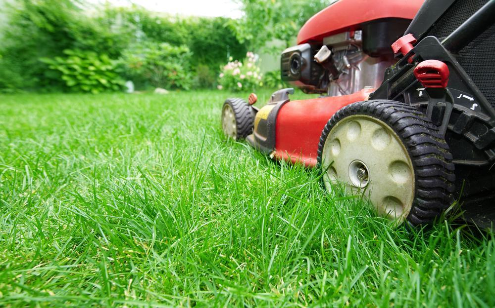 Expert Lawn Maintenance
