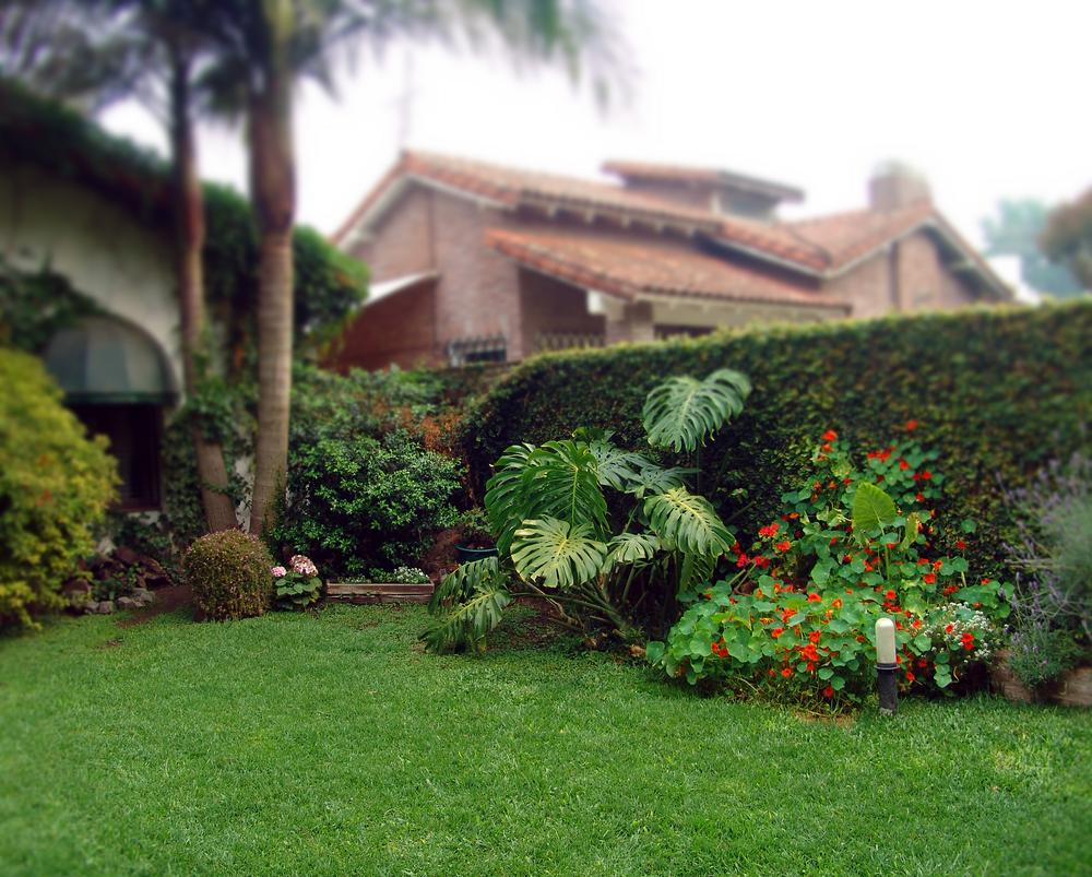 Affordable Commercial Lawn Maintenance