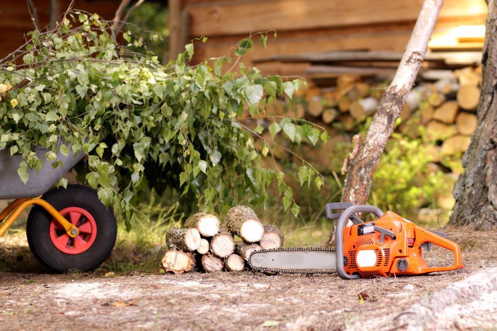 Tree Removal Service in Miami