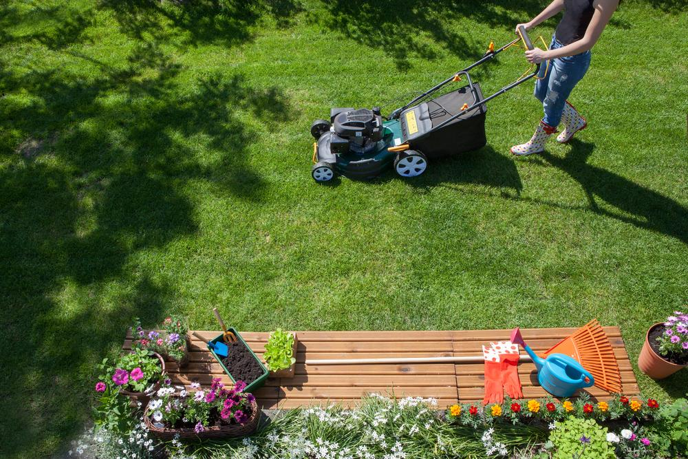 Best Lawn Treatment