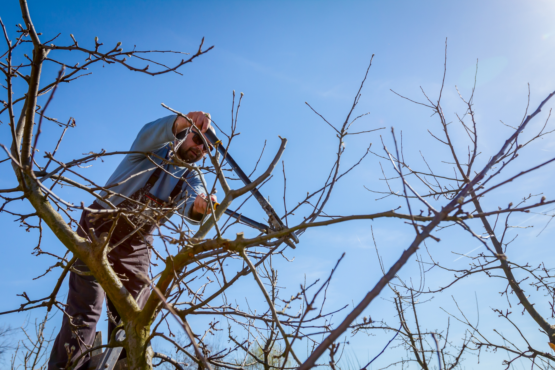 pruning trees in Miami