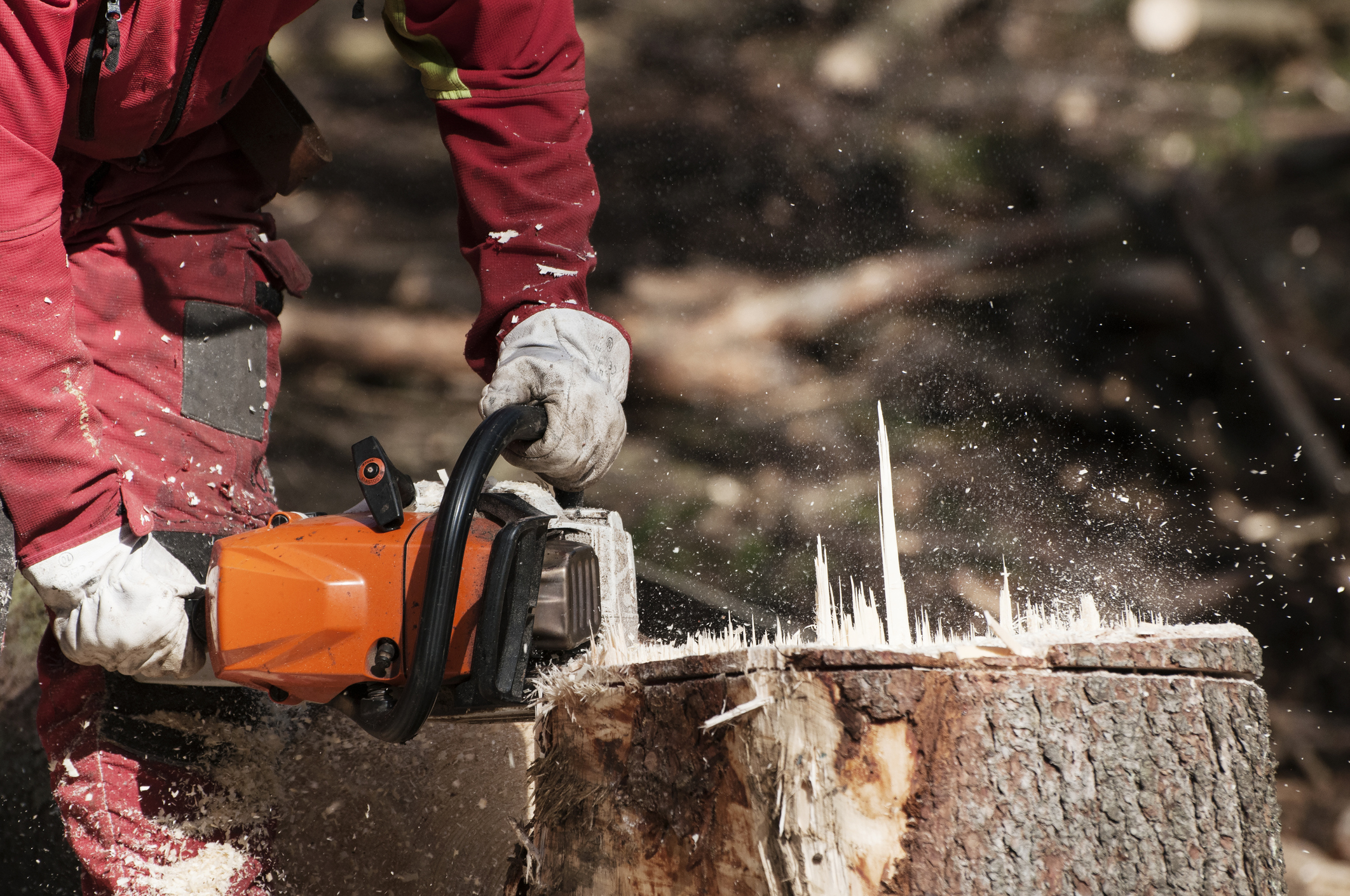 stump removal tips