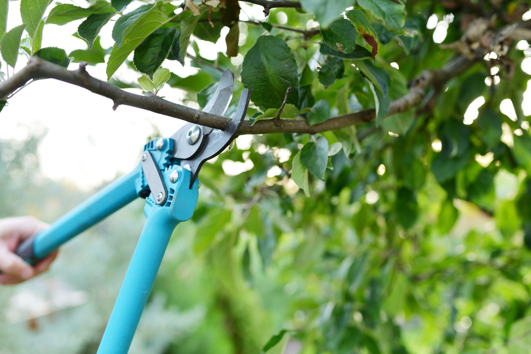 Pruning Trees in the Spring