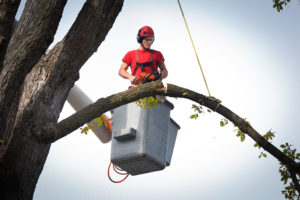 Tree Removal Service in South Miami