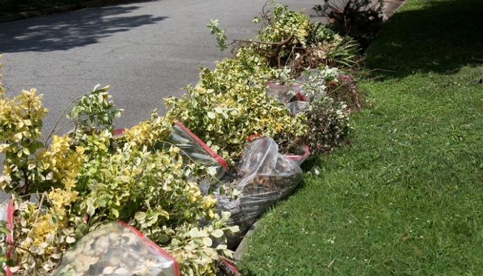 Landscape Debris Removal in Dadeland