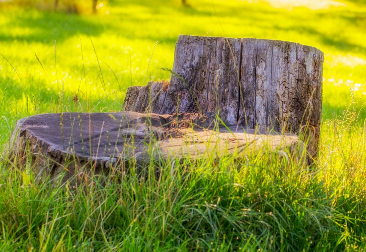 Stump Removal Service in Dadeland